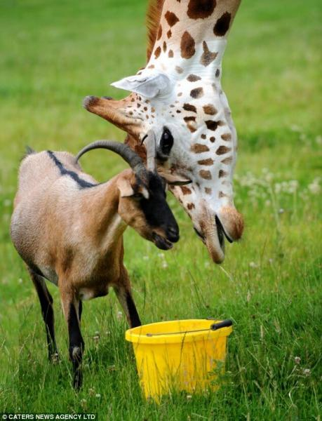 Дружба различных видов животных