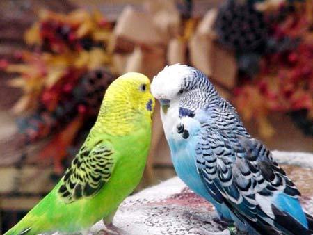 Продолжительность жизни домашних животных. Птицы