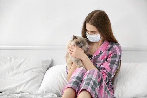 Аллергия на кошку: как справиться с этим