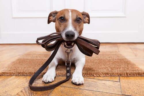 Льняная тренировка: что делать, если собака не работает