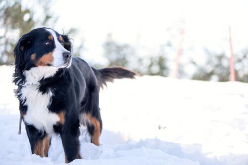 5 направления для владельцев собак в Европе