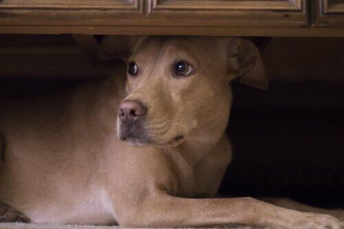 Страх перед шумом: как помочь домашним животным?