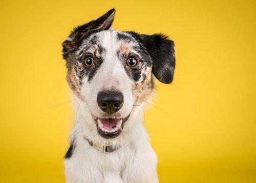 Проект Желтая Собака: больше свободного пространства для вашего питомца