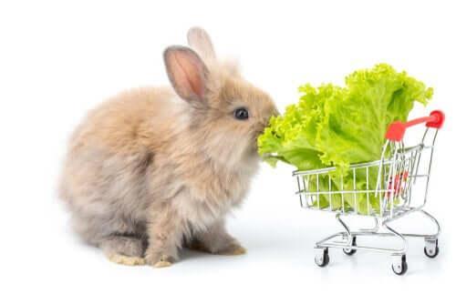 Растения для вашего кролика: что подходит для кормления?