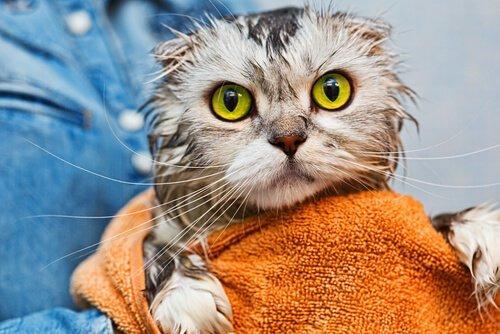 Заболевания глаз у кошек: профилактика и уход