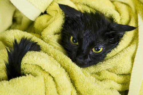 Суеверие, что черные кошки приносят несчастье