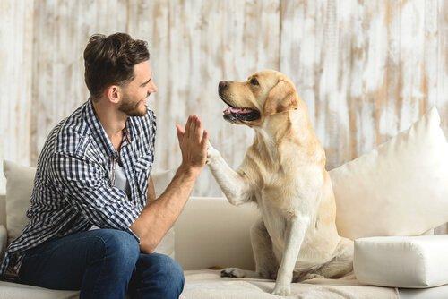 Этология для собак: назначение вашего мехового носа