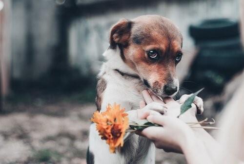 Собаки, которые ненавидят своих владельцев-отношения с окружающей средой