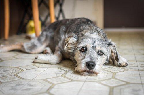 Поведенческая терапия для собак, все, что нужно знать