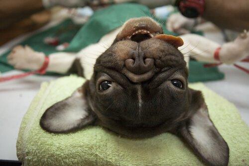 Анестезия у домашних животных, все, что нужно знать!