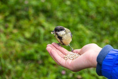 Диета птицы: как это сделать правильно?