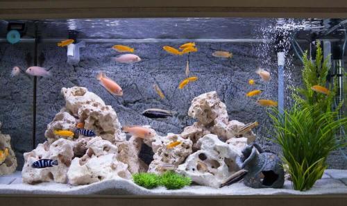 Продолжительность жизни Рыб в аквариуме