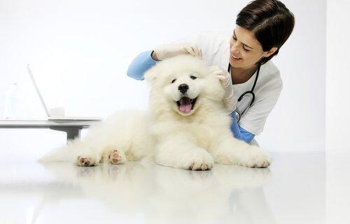 Дирофиляриоз у собак: лечение и профилактика