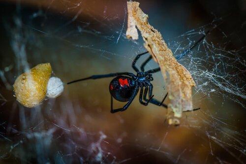 Как избежать пауков дома?