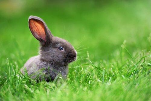 Мини карликовый кролик: особенности и уход