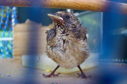 Как спасти и накормить птичку