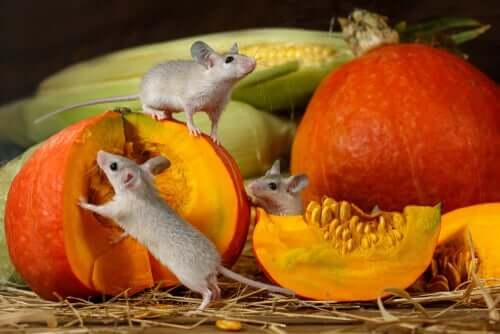 Лакомые кусочки для грызунов: что подходит для кормления?