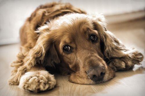 Более 100 собак спасли из незаконного питомника