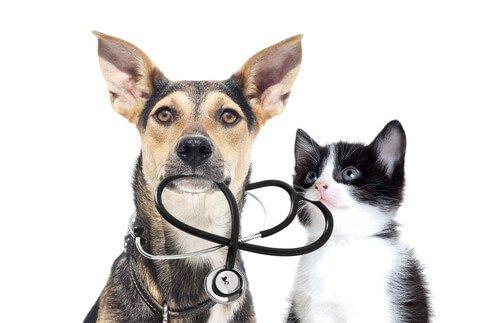 Осмотр у ветеринара для домашних животных