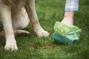 Может ли собака передавать сальмонеллы людям?