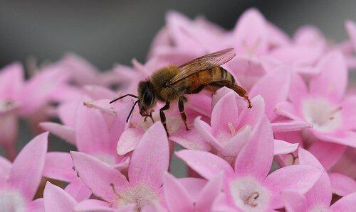Пчелы необходимы для нашего выживания