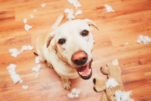 Насколько хороша память собаки?