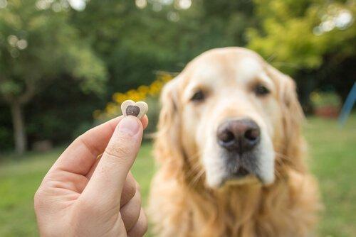 Внимание у собак: советы и советы