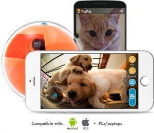 PlayDate: модные игрушки для собак