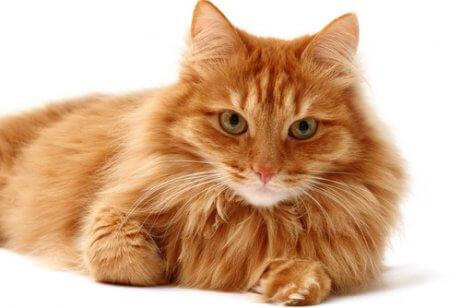 Смена пальто у кошек: 5 вещей, которые вы должны знать