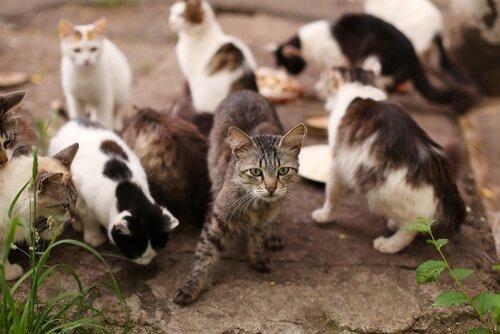 Лямблиоз кошки: симптомы и способы заражения