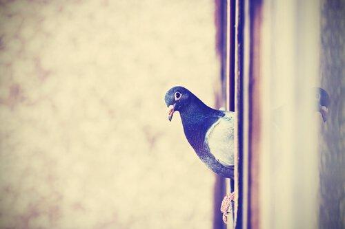 Отпугивание голубей: 7 советов