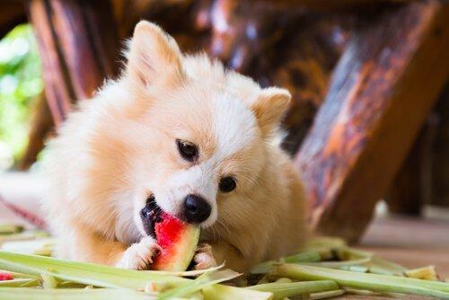 Летние фрукты для вашей собаки, все, что нужно знать