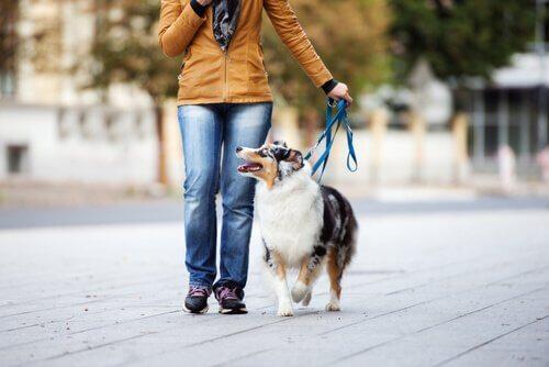 Gassigehen с собакой: советы и советы