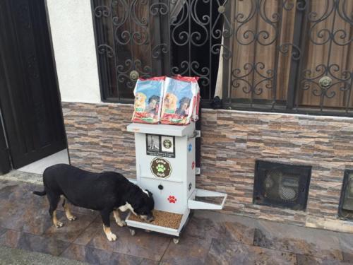 Уличные собаки страдают от голода и жажды: кто им помогает?
