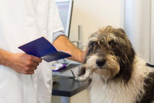 Путешествия с домашними животными: необходимые документы