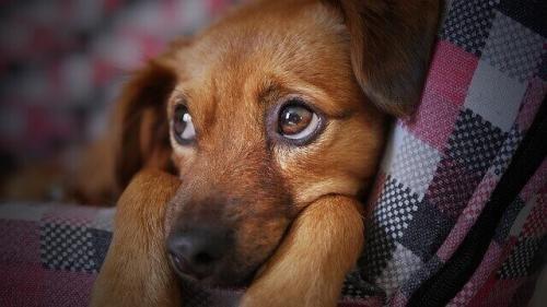 Грипп у собак: Профилактика и уход