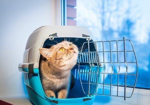 Спасение кошки или собаки: 7 важных советов
