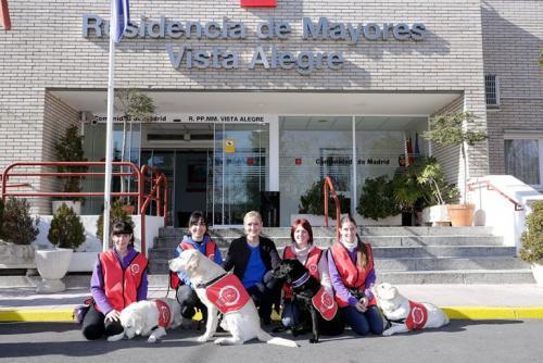 Терапевтические собаки Мадрида в использовании