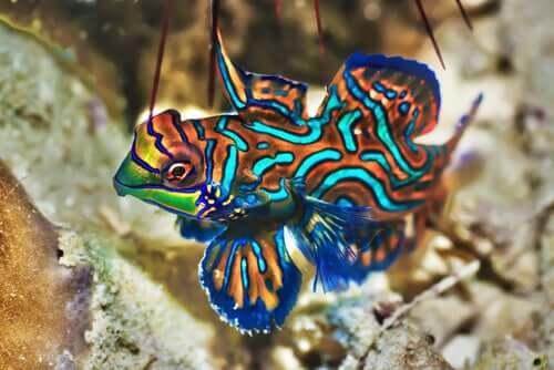 Аквариум: какие самые красивые рыбы?