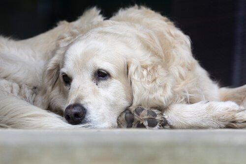 Что делать, если у моей собаки рак?