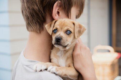 Как сигнальная собака меняет жизнь глухого ребенка