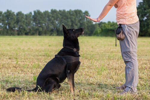 Ошибки в обучении собак: избегайте их!