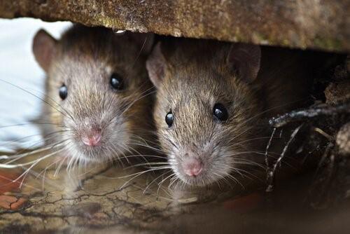 Интересные факты о животных с кратчайшей продолжительности жизни -