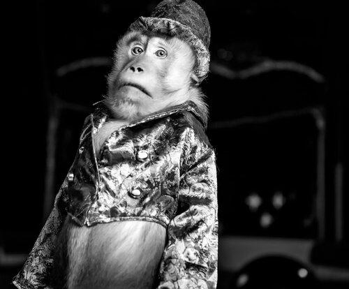 Жестокость животных: обезьяна с одеждой не смешно